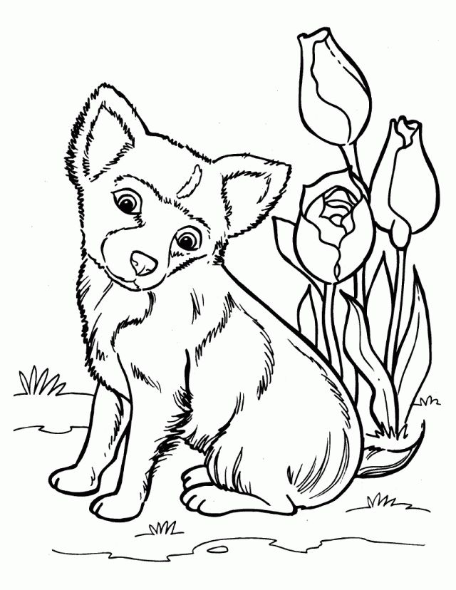 Husky Coloring Pages Best Coloring Pages For Kids Puppy Coloring Pages Dog Coloring Page Dog Coloring Book