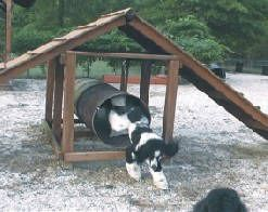Dog Play Ground Equipment My Dogs Need This In The Backyard Cool Stuff Pinterest Playground And