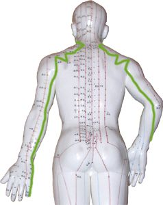 The Upper Body Meridians