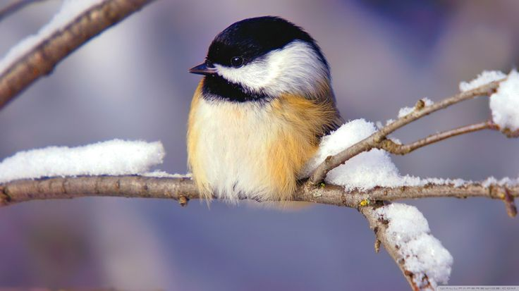 free screensaver wallpapers for bird