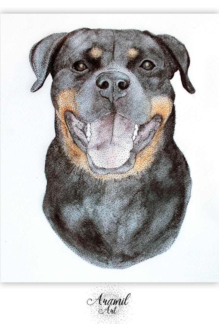 Rottweiler/dog drawing, created by using about a thousand dots and colored with watercolour pencil. Art by Petra Jánosi. Come and check on FB. :)  https://www.facebook.com/aramilart