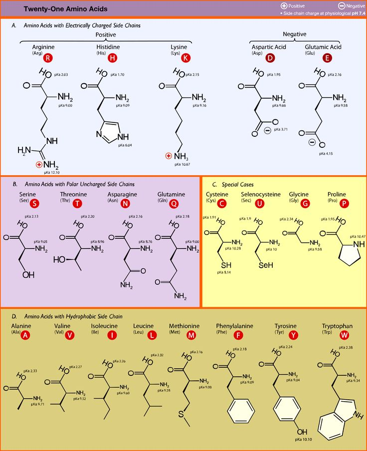 Best Amino Acids Images On   Amino Acids Biochemistry