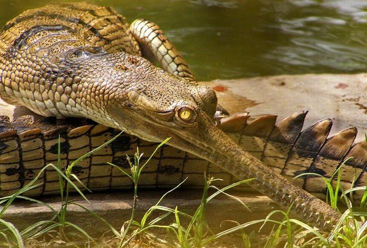 Лучшие фотографии со всего света - Необычные и редкие животные
