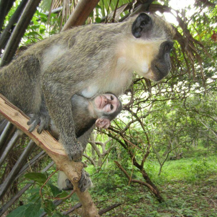 Bijilo Forest Park, Gambia Kololi