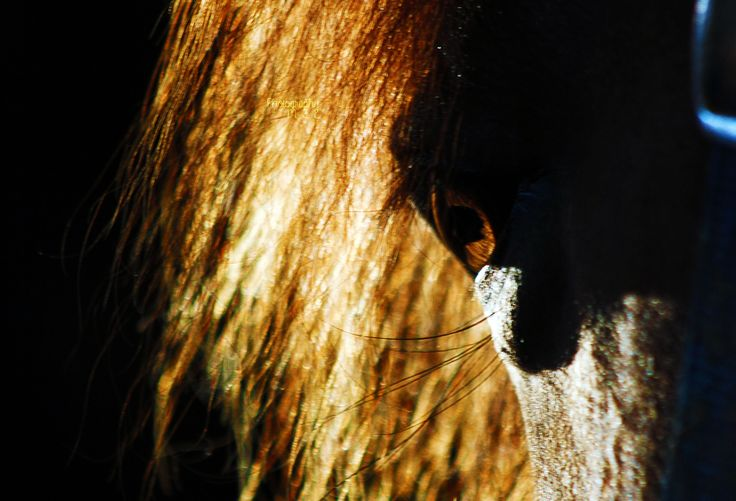 A horse's eye is the gate to the sole.