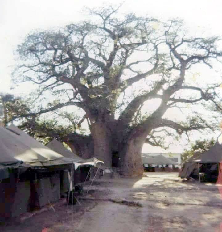 Famous Boab tree Ombalantu