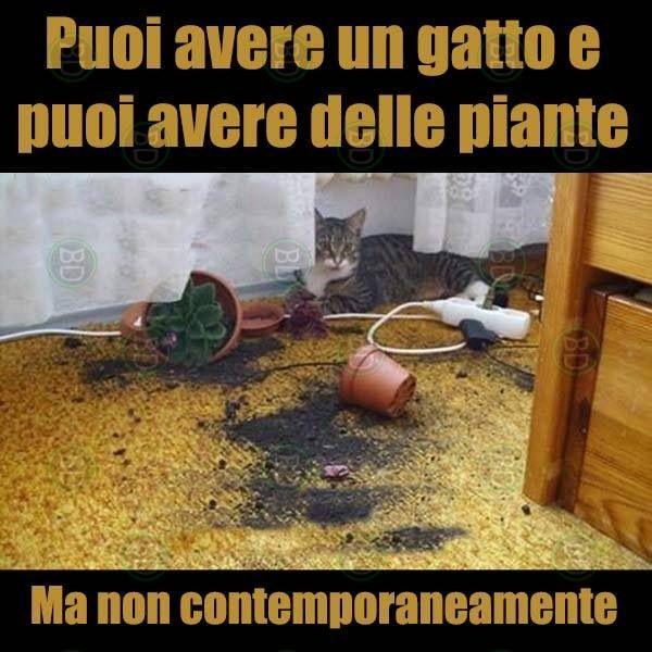 Puoi avere un gatto e puoi avere delle piante. Ma non contemporaneamente.