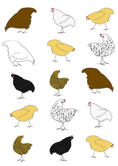 Chickens082012 by MyLovenArt, via Flickr