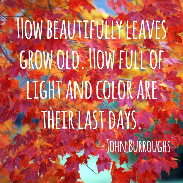 Ties into my journal entry about my love of the leaves changing colors in the fall