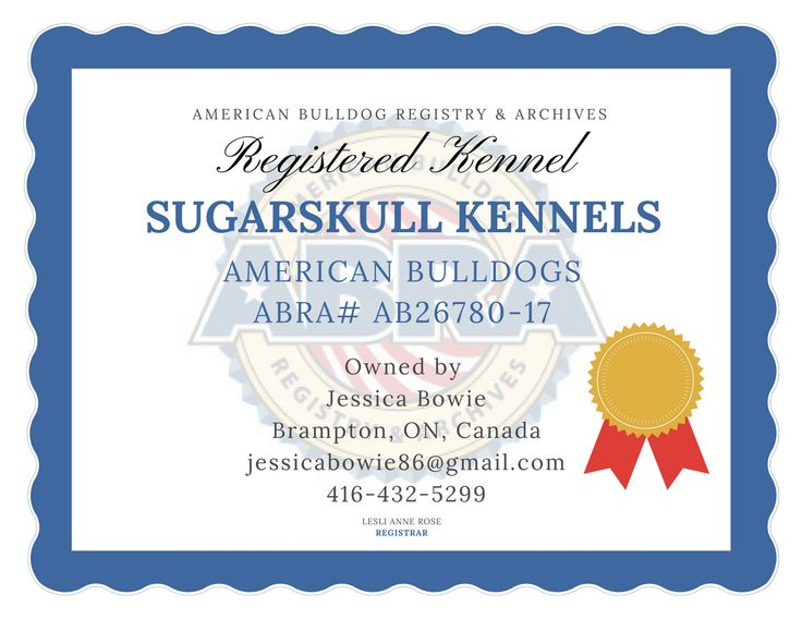 Welcome to the ABRA Jessica!  SugarSkull Kennels ABRA #AB26780-17 Jessica Bowie Brampton, ON, L6V 3N4, Canada 416-432-5299 JessicaBowie86@gmail.com  ABRA Registered American Bulldogs in Brampton, ON, Canada!  http://www.abra1st.com/registered-kennels/