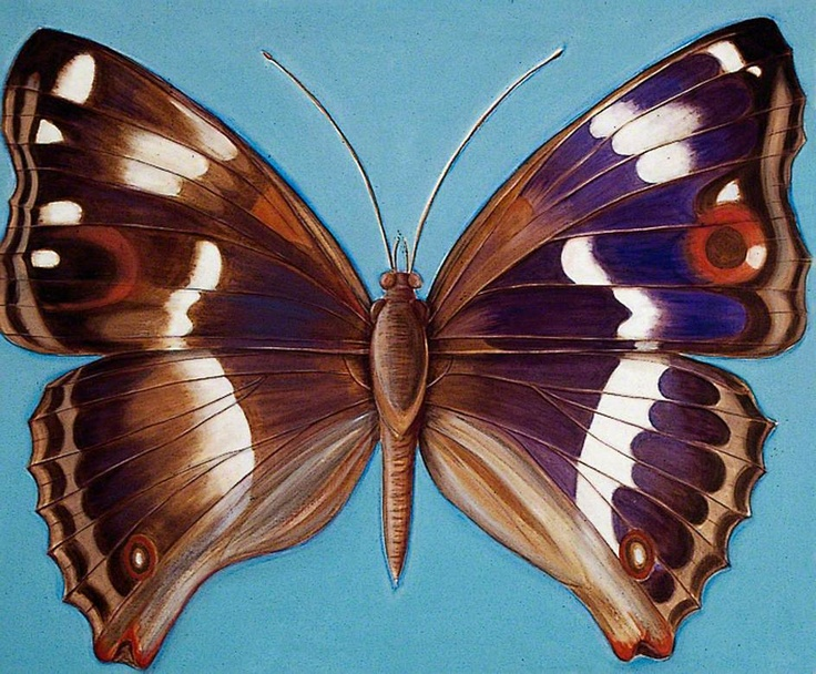 Purple Emperor Butterfly by Shyama Ruffell http://www.bbc.co.uk/arts/yourpaintings/paintings/purple-emperor-butterfly-70336