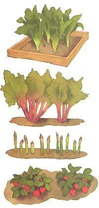 Companion Planting: Strawberries, Asparagus, Rhubarb and Horseradish
