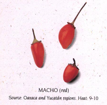 macho red pepper
