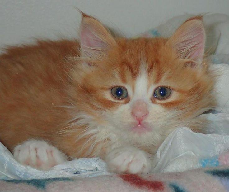 Upper Credit Humane Society Cats