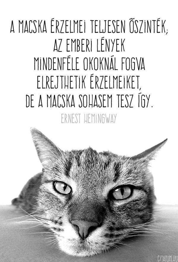 Ernest Hemingway idézet a macskák érzelmeiről.