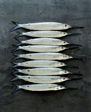 Untitled by one of Australia's premium food & lifestyle photographers, William Meppem.