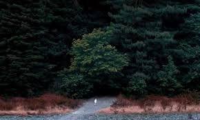 Résultats de recherche d'images pour «woodshock»
