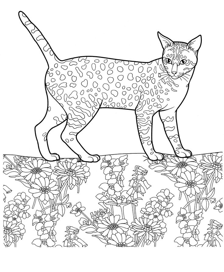 Free Coloring Pages Of Dogs And Cats : 141 best free colouring: other printables images on pinterest