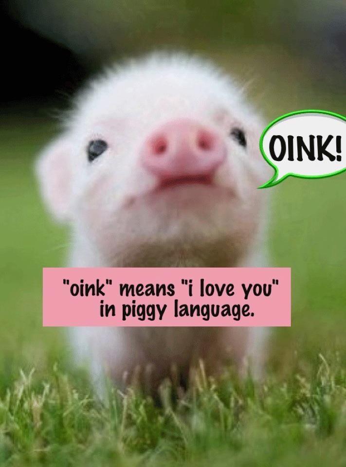Worlds cutest piglet - photo#25