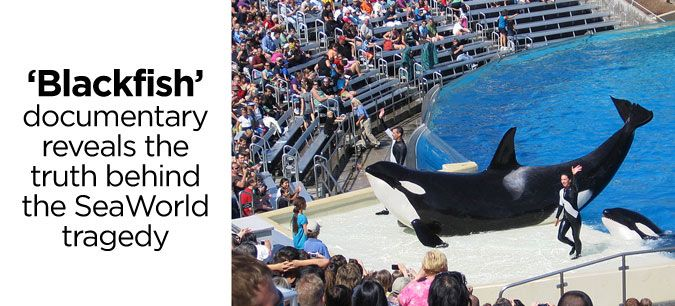 The controversial 'Blackfish' documentary makes its TV debut on CNN, revealing the truth behind the SeaWorld tragedy. #movie #Blackfish #whale