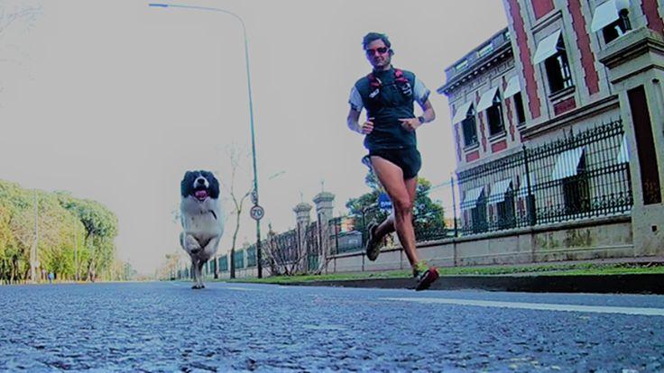 #Perra y humano: así entrena esta dupla para correr la media maratón de Buenos Aires - LA NACION (Argentina): LA NACION (Argentina) Perra y…