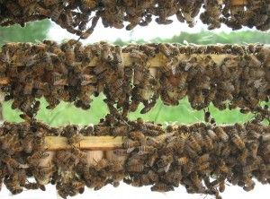 Chatsworth Honey Queens & Nuks Located South of Owen Sound