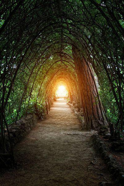 En Barcelona, fui al parque Güell. El parque tenía muchas plantas y una calle cubierto de árboles.