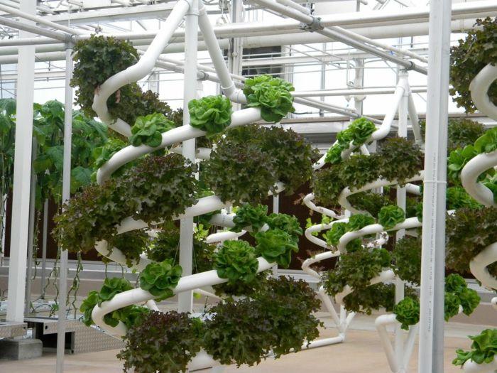 hydroponie verticale