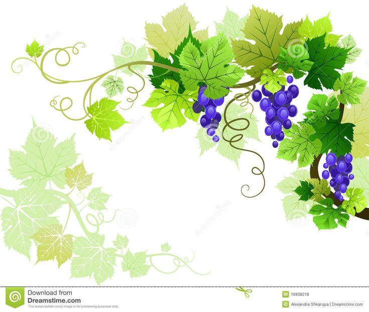 Grapes Royalty Free Stock Photos - Image: 16938218