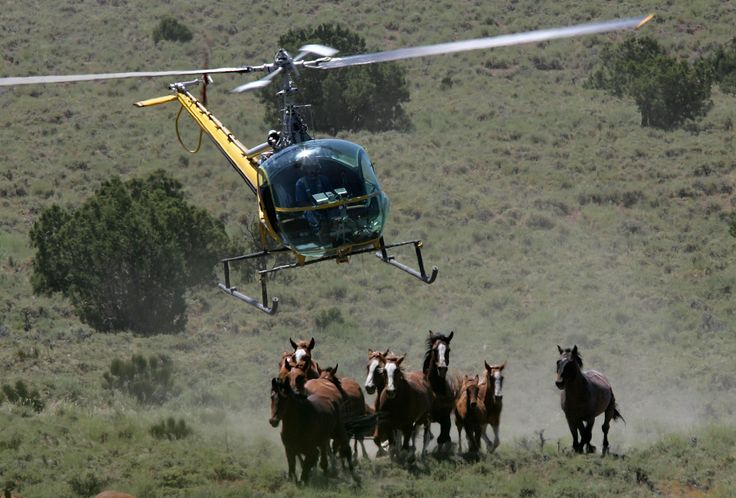 The fate of thousands of wild horses hangs in the balance as the Senate considers allowing euthanasia of mustangs and burros