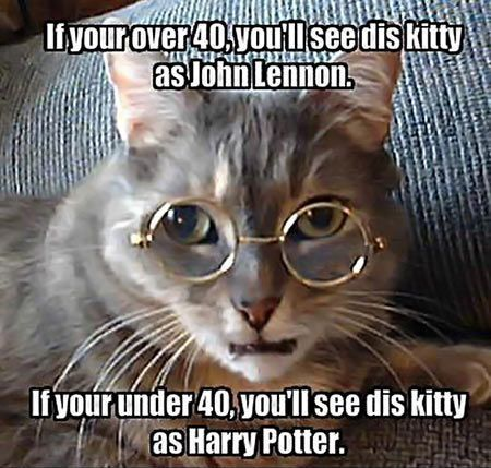 """#funny #cat For some reason, I saw neither but... Benjamin Franklin. Does that make me """"immortal""""?"""