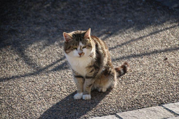 https://flic.kr/p/FHqCo6 | Chat | Un des chats photographiés à Palaminy