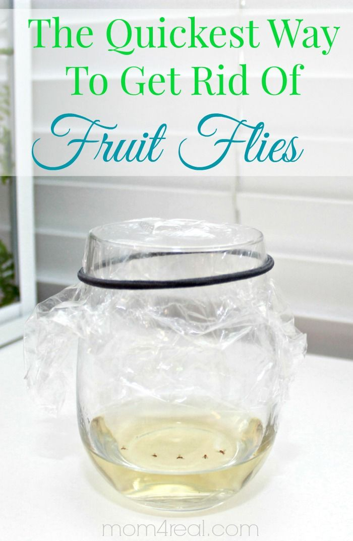 How to get rid of fruit flies or gnats the easy way and tons more tips and tricks at mom4real.com