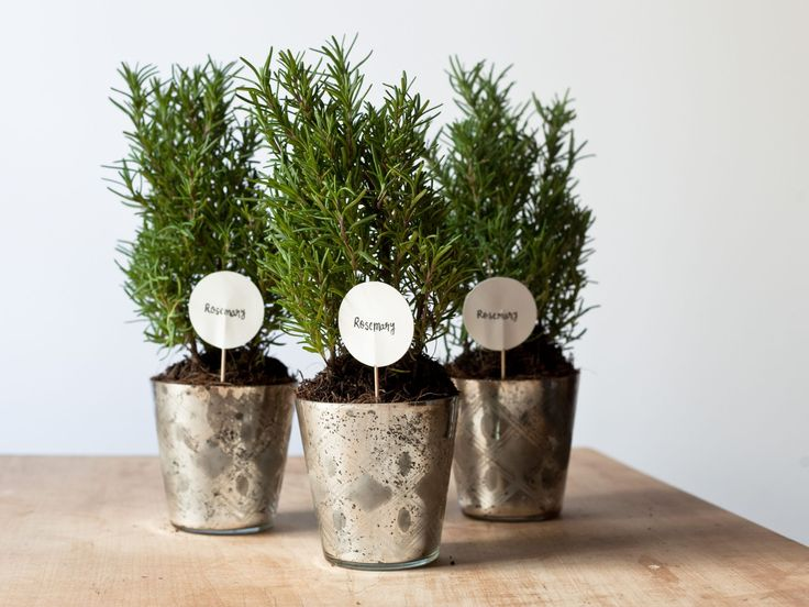 Potted Herbs : Potted plants are the gift that keeps on giving. Guests can plant the herbs in their garden when they get home or keep in their kitchen year-round. Each time they snip off a few leaves, it will bring to mind your wedding. Not only do herbs like rosemary make the room smell great, but you can also use them as centerpieces.