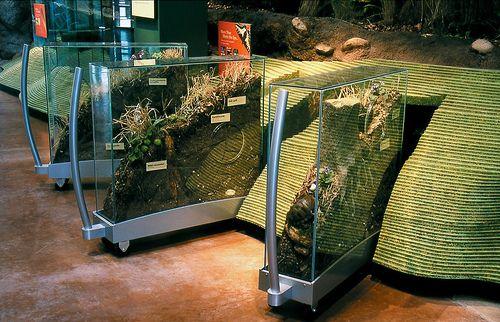 Turtle Bay Museum, Museums, Interpretive Planning, Exhibit Design, AldrichPears Associates - 083