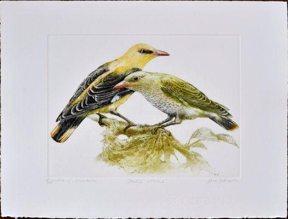 Eurasian golden oriole  Oriolus oriolus  by AtelierPoltorak