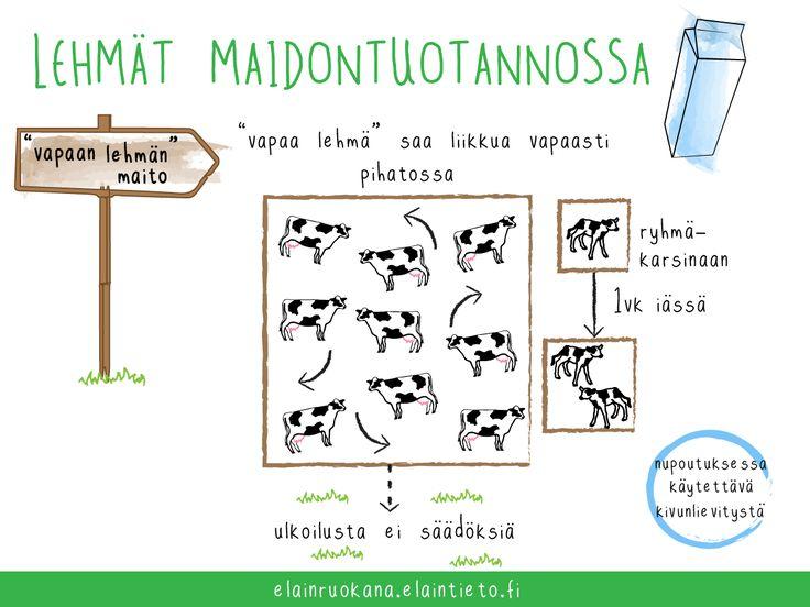 Vapaan lehmän maidontuotanto perustuu vapaaehtoisuuteen. Vapaan lehmän maito on yksittäisen meijerin oma tuotemerkki. Sillä ei ole omia erillisiä säädöksiä eikä tavanomaisesta poikkeavaa viranomaisvalvontaa.