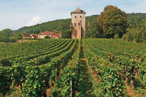 Le domaine du château de Gevrey-Chambertin.  ou : le domèn du zato de devrey-tanbertin