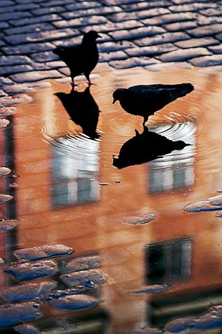 After the Rain #Reflections #Crows #Photography
