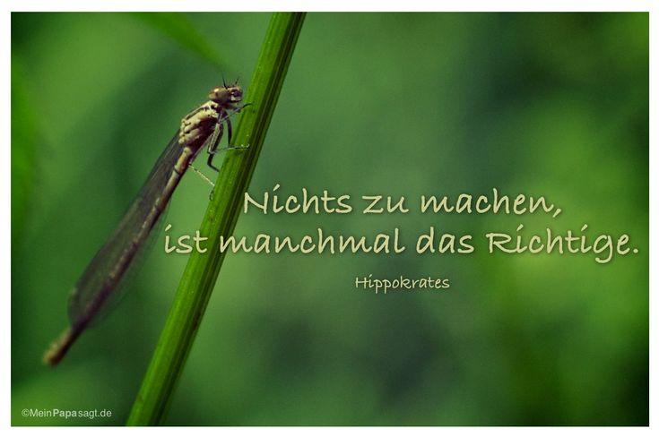Mein Papa sagt...  Nichts zu machen, ist manchmal das Richtige.  Hippokrates   Weisheiten und Zitate TÄGLICH NEU auf www.MeinPapasagt.de