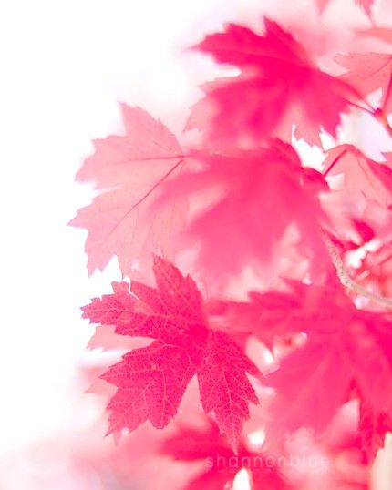 pink autumn by Kanae   on Etsy