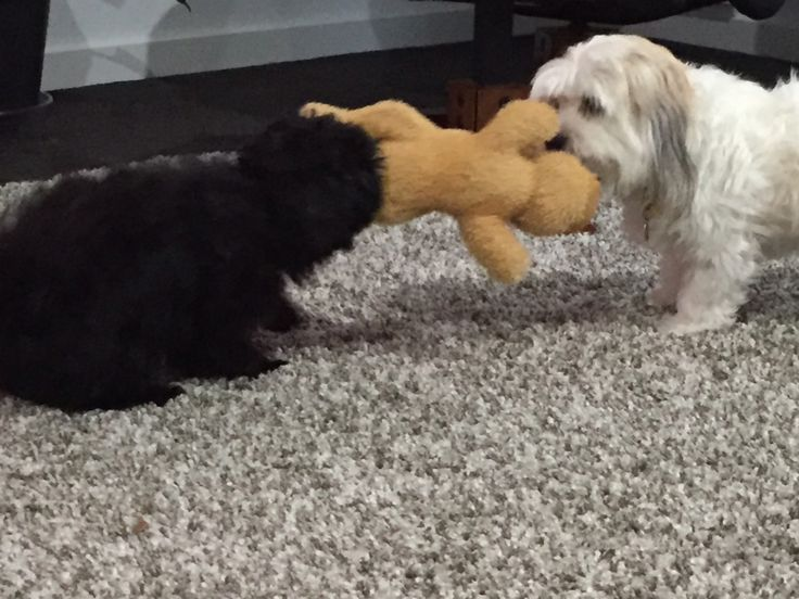 Learning to share, or not