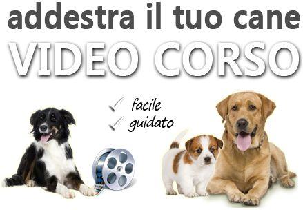 Corso di Addestramento Cani