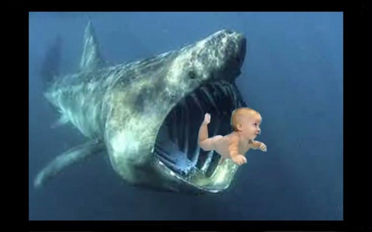 sharks eating people - Google Search   Basking shark, Deep ...