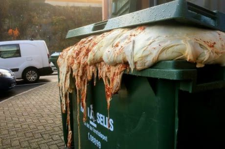 My local pizza place threw out their leftover dough in a garbage bin and it started growing