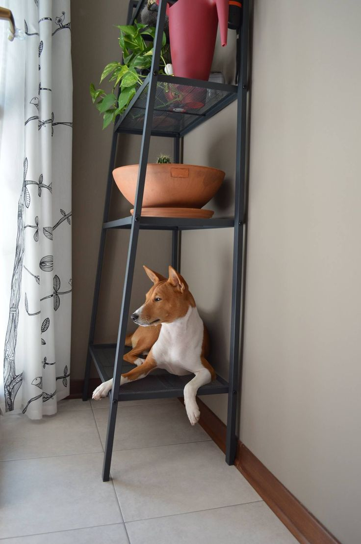 Nice arrangement; I deserve a shelf for myself.