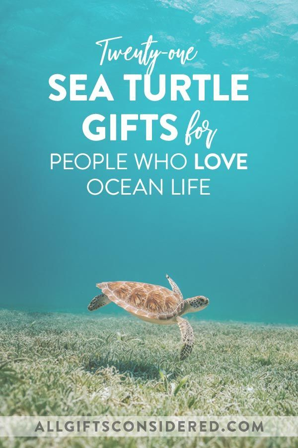 Keepsake Men Sea Turtle Gifts For Women Lover Adults Christmas Plaques Plate Paperweight Girls