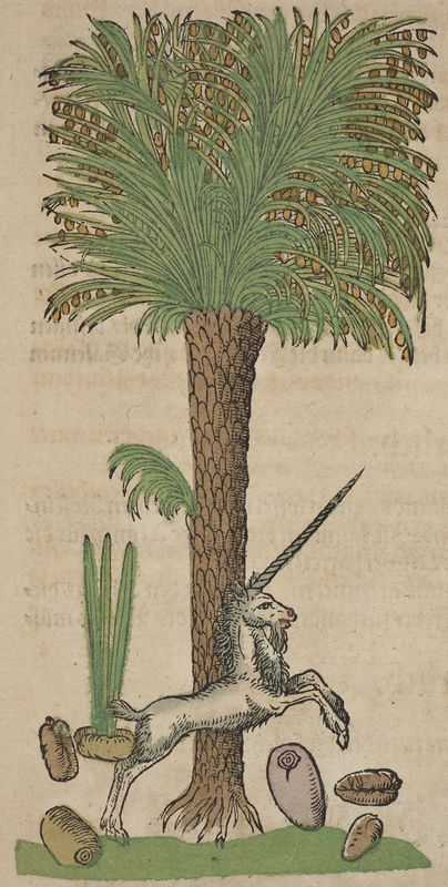 Date palm | Kreutterbuch, (Strassburg, 1580) | author: Hieronymus Bock, botanist (1498–1554) | illustration: David Kandel | first edition of his herbal was published in 1546 with 550 woodcuts by David Kandel. In the third part the depictions of trees are enlivened by genre scenes with animals and people, whose activities allude to the particular uses and character of the trees.