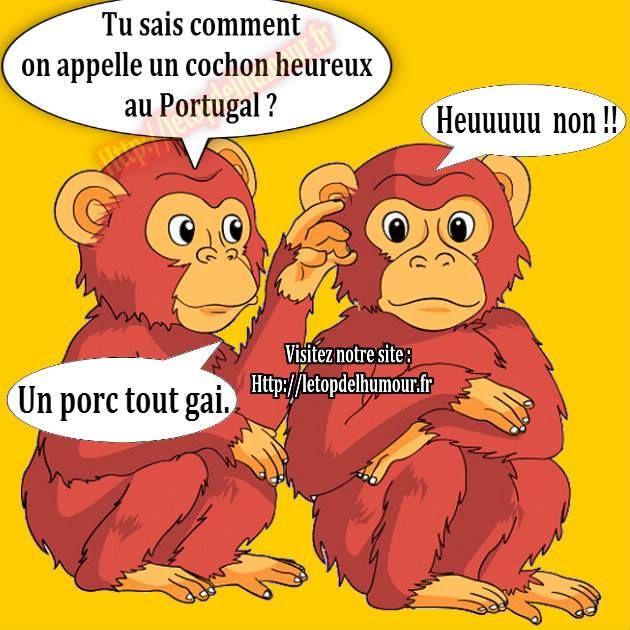 Comment appelle t-on un cochon heureux au Portugal ?