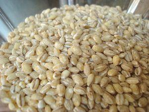 Barley.JPG - © Miri Rotkovitz
